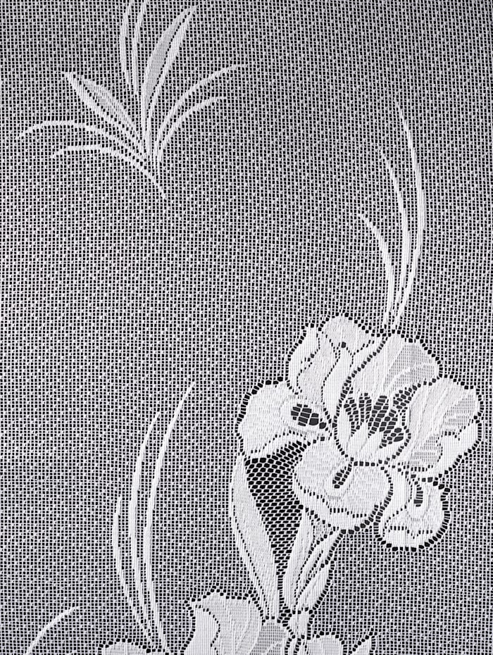 Gardin Iris