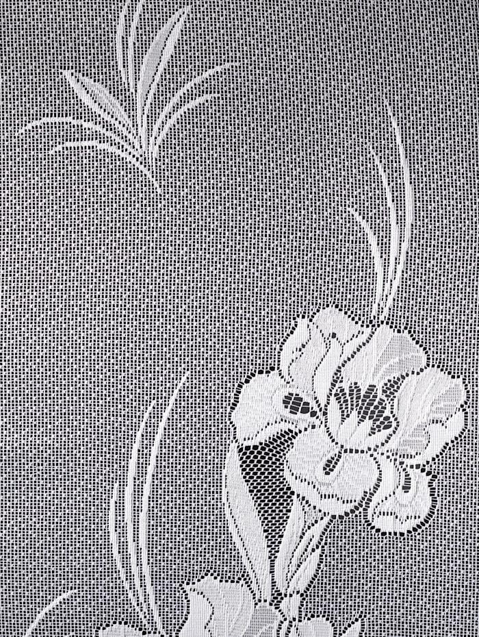Gordijn Iris