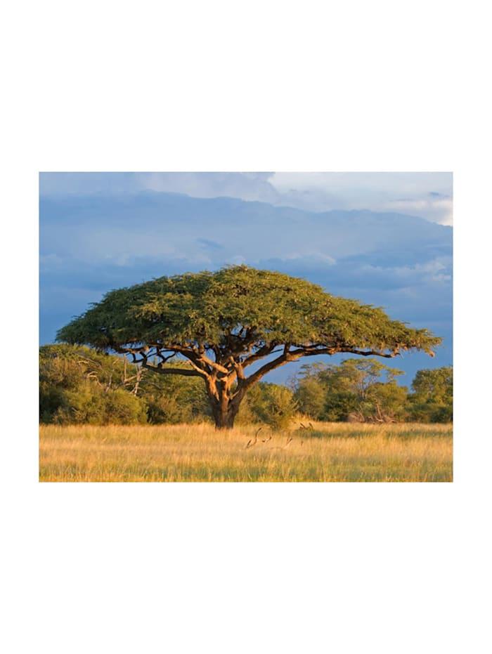 Fototapete Afrikanische Akazie im Nationalpark Hwange, Zimbabwe