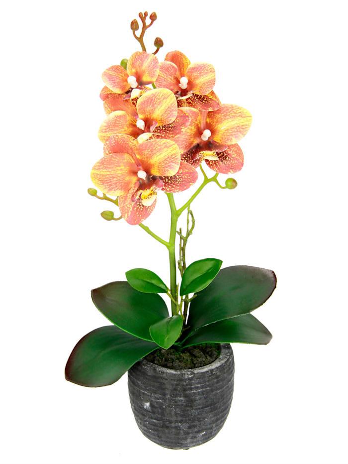 IGEA Orchidee in pot, Oranje