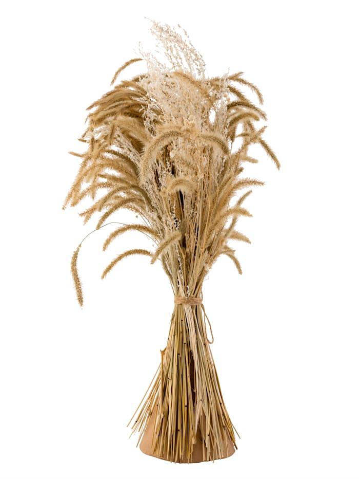 IMPRESSIONEN living Deko-Gräser, naturfarben