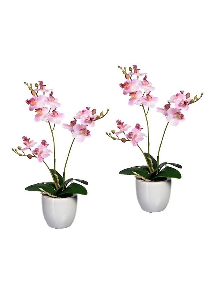 Globen Lighting Lot de 2 mini orchidées, Rose