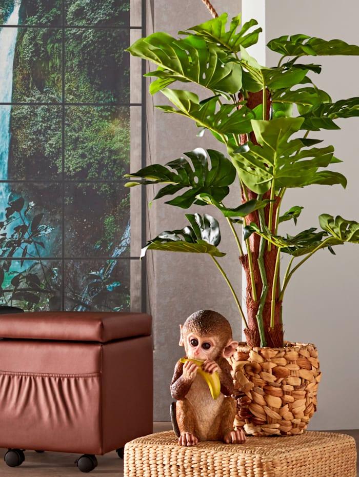 Split philo-plante