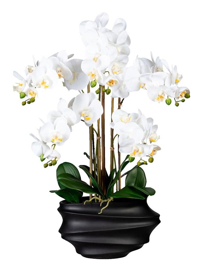 Globen Lighting Orchidee in schwarzer Vase, Weiß