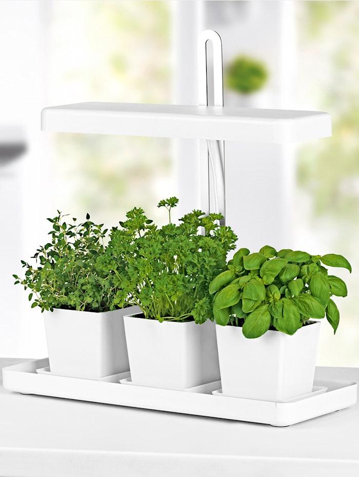 Lampe pour plantes à LED, Blanc