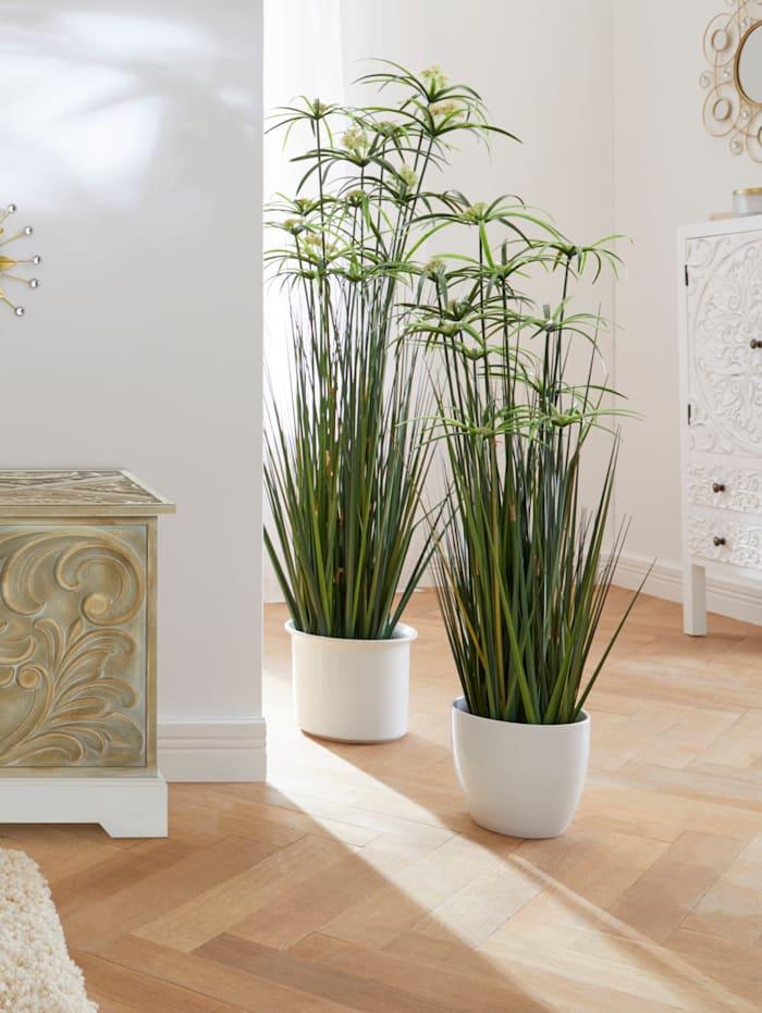 IGEA Papyruspflanze im Topf, Grün/Schwarz