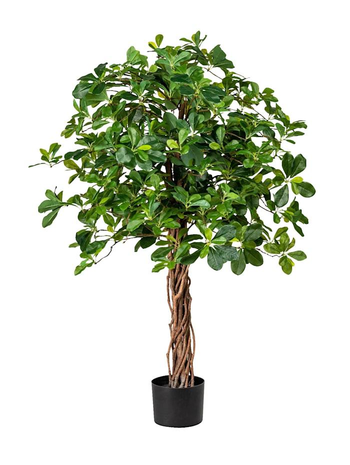 Ficus Wetsland