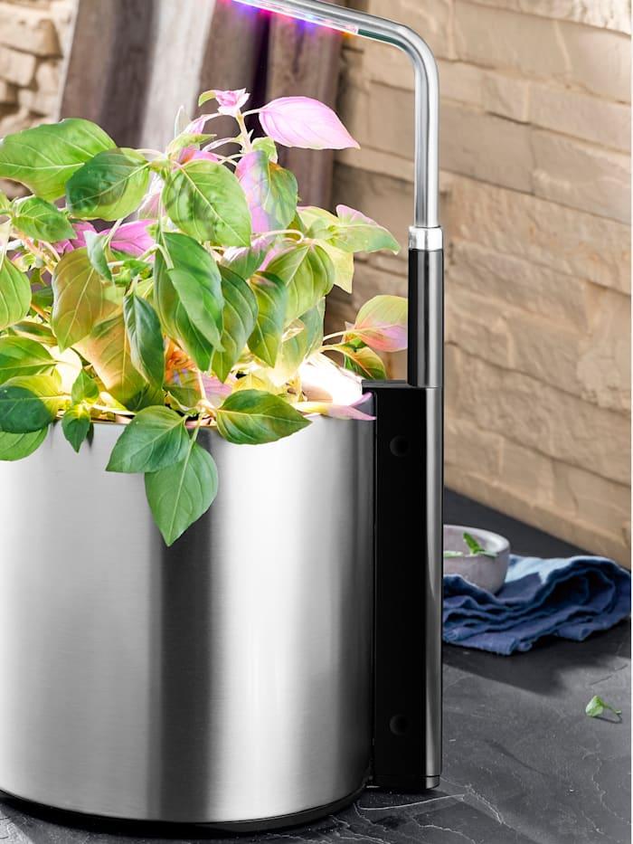 Ambient plantelys