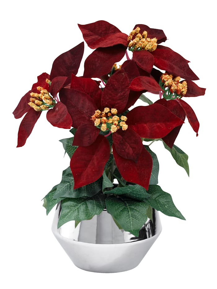 Globen Lighting Poinsettie, Beere