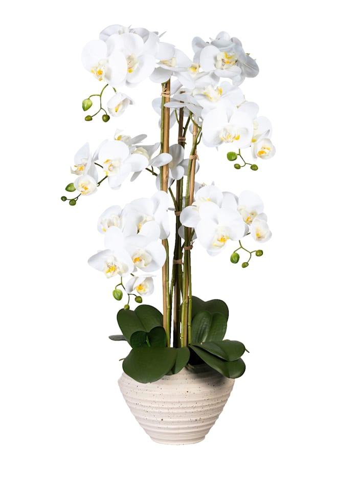 Globen Lighting Orchidee in Keramiktopf, Weiß